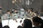 Visita ao Jardim Botânico e à Galeria da Biodiversidade - Centro Ciência Viva do Porto
