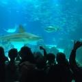 Visita do 5.º Ano ao Pavilhão do Conhecimento e ao Oceanário de Lisboa